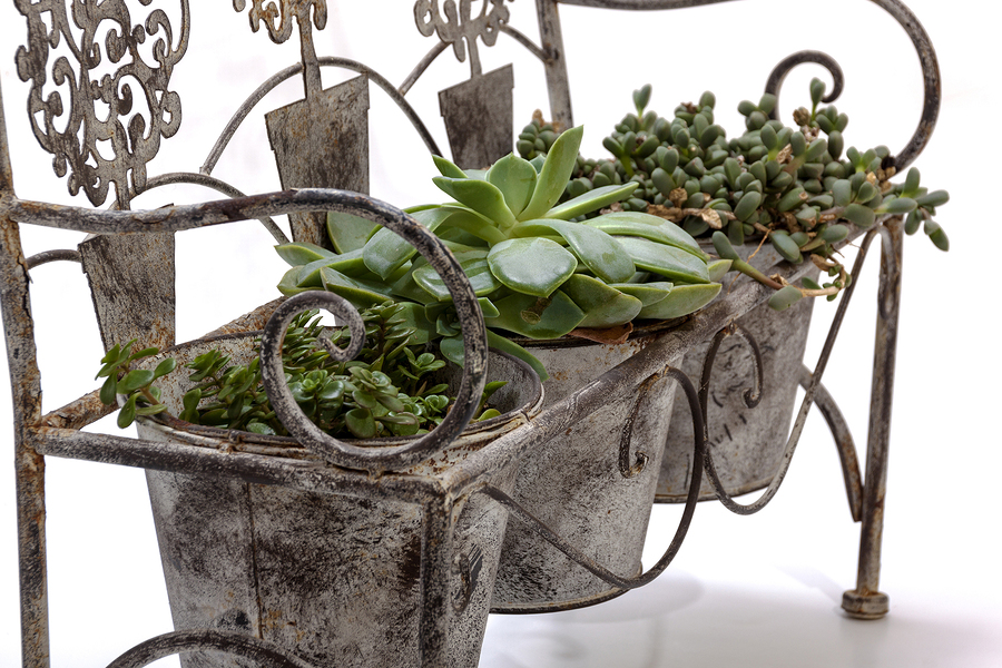 Triple metal plant holder with plants