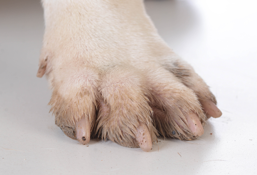 Wet, dirty dog paw